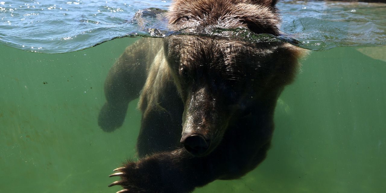 The second wave of a rolling bear market...