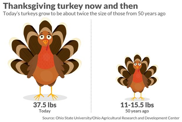Smaller Turkeys Are Flying Off The Shelves As Americans Downsize Thanksgiving Marketwatch