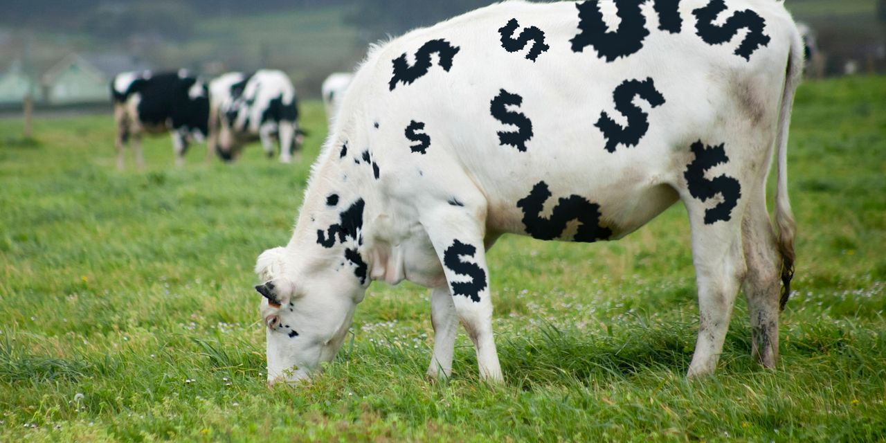 These stocks are 'cash cows' that give you a better way to play the value sector