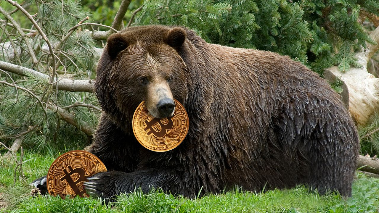 bitcoin bear)