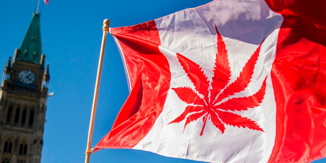 Canadian cannabis companies won't turn a profit in the coming quarter and here's why
